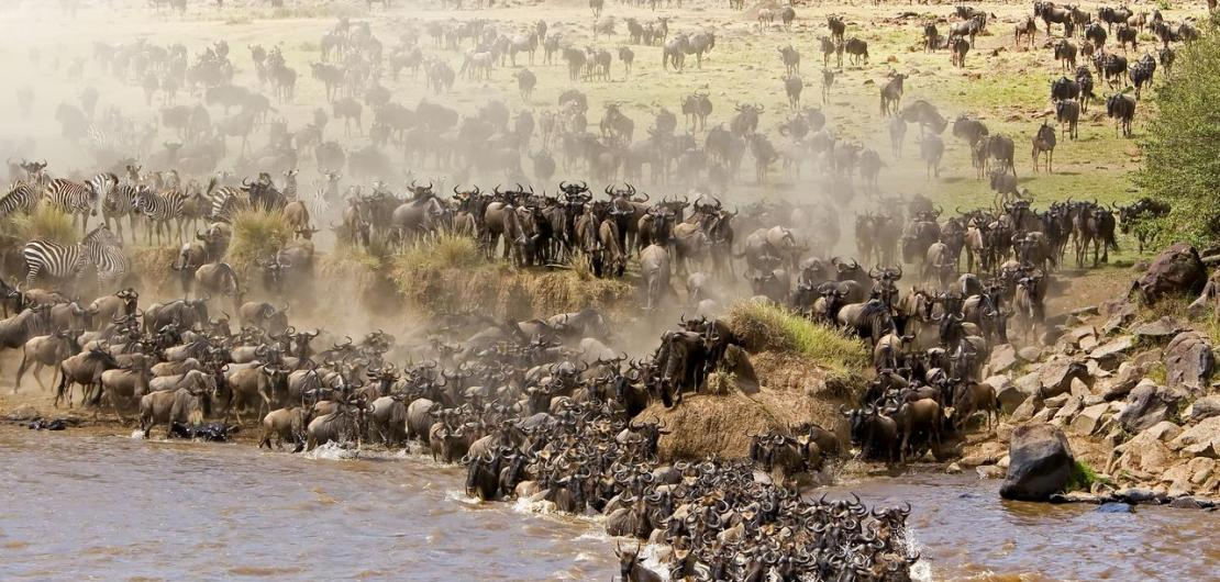 5 Day Masai Mara Safari